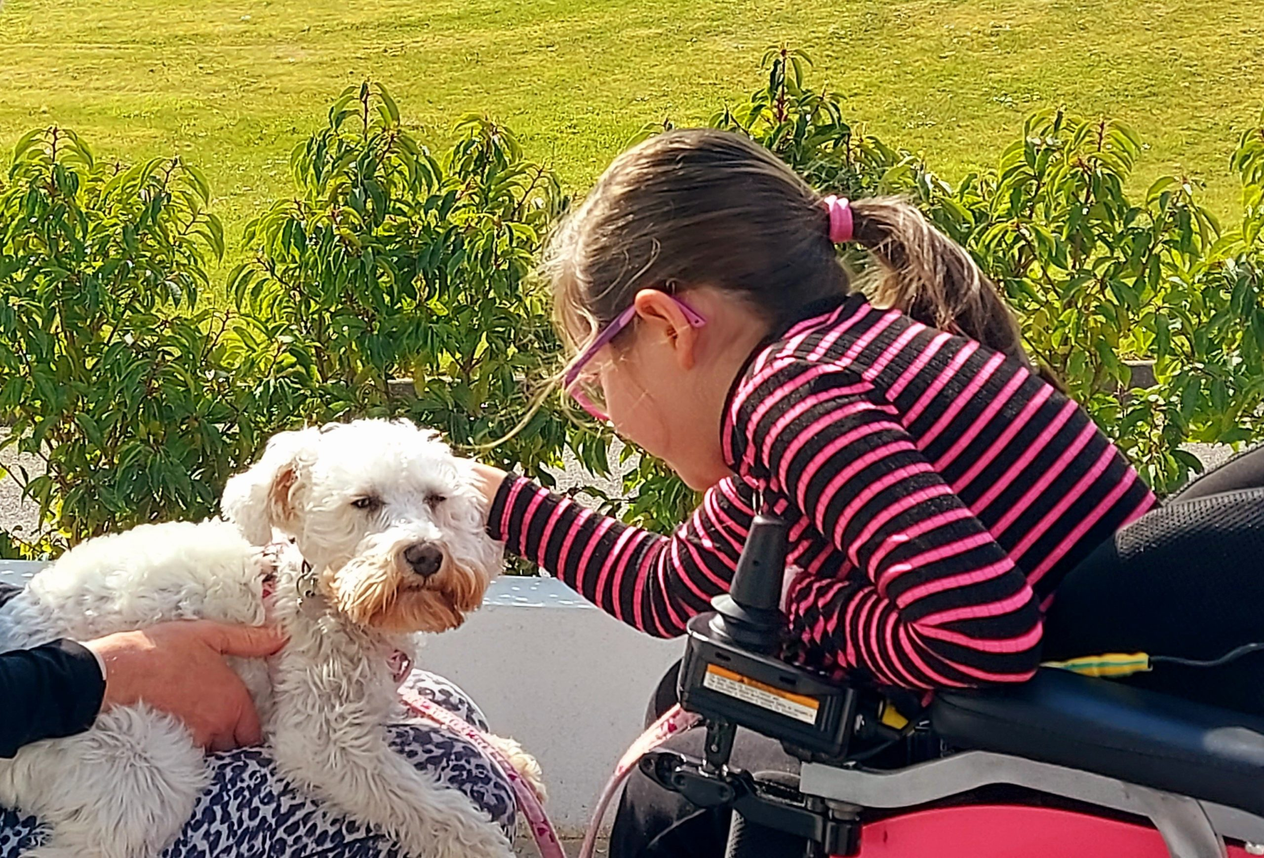 Julie petting a small white dog on a lap.